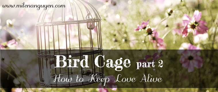 bird-cage-21.png