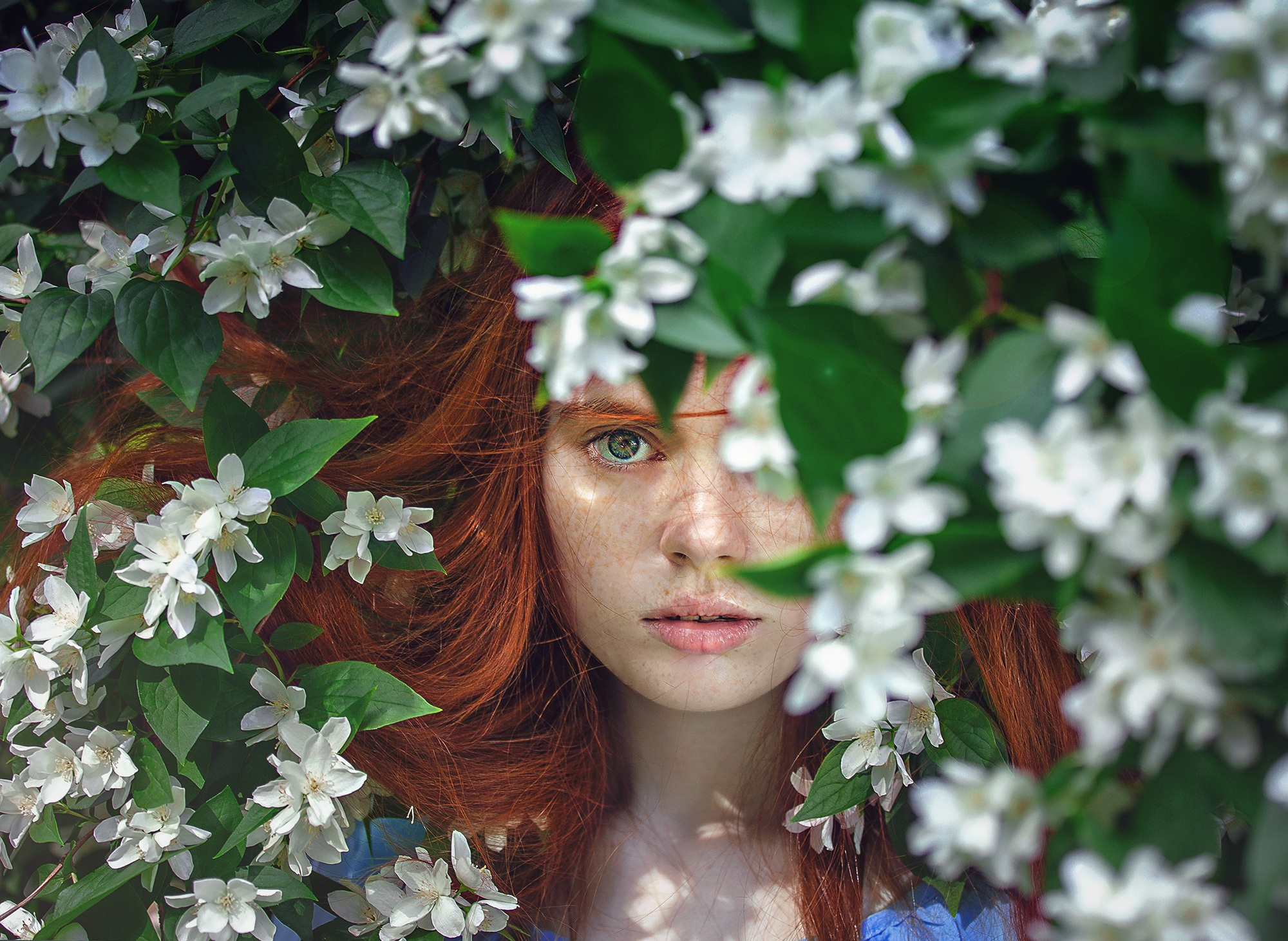 woman face green tree eyes secrets.jpeg