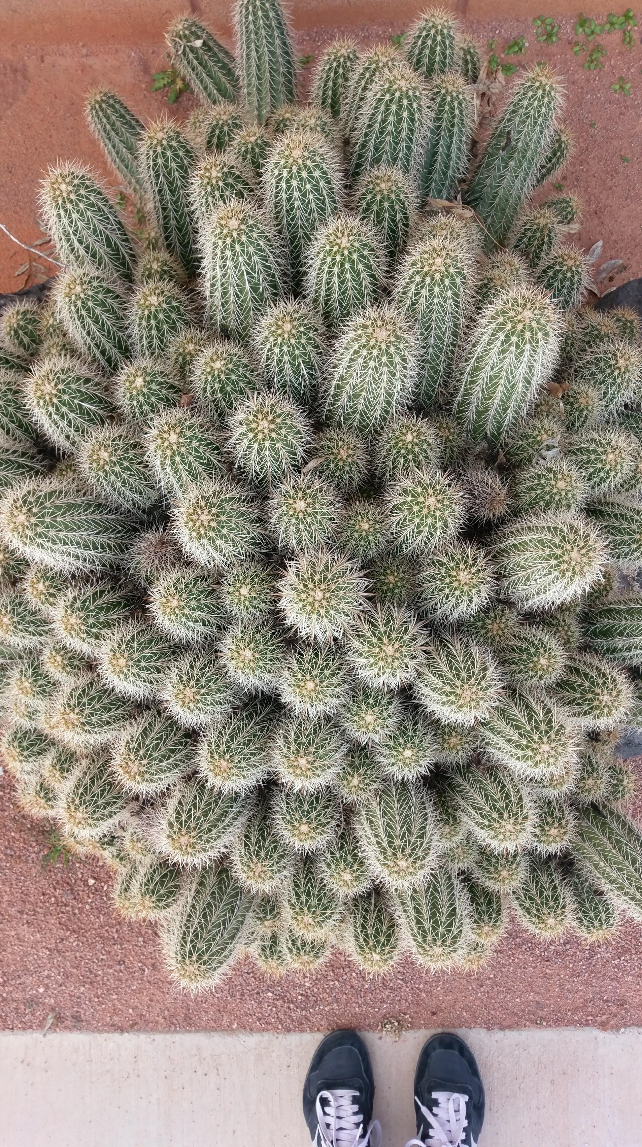 Cactus photo because I love cactus