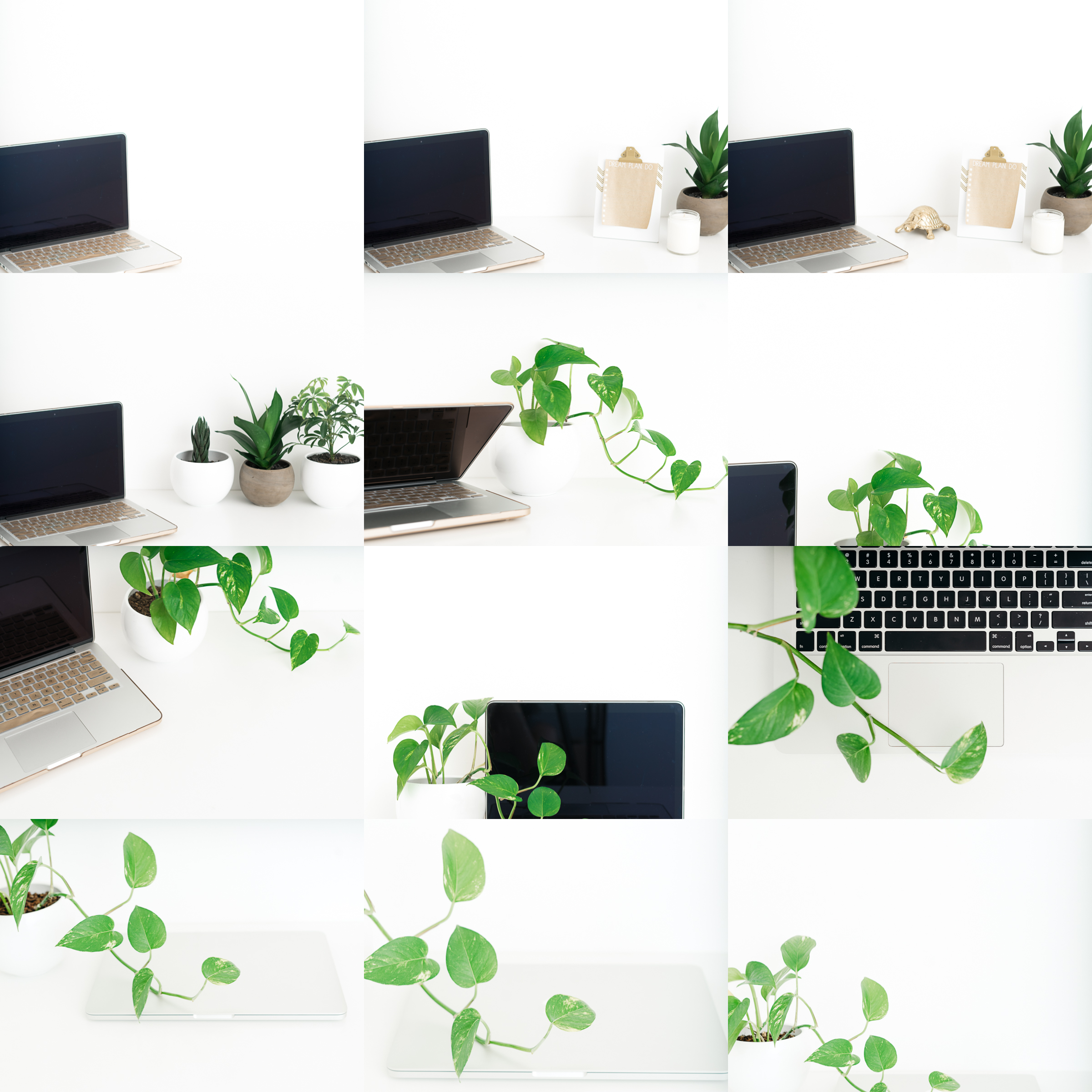 Laptop & Leaves - Created for brands that work from their laptop and love having plant life around their workspace.