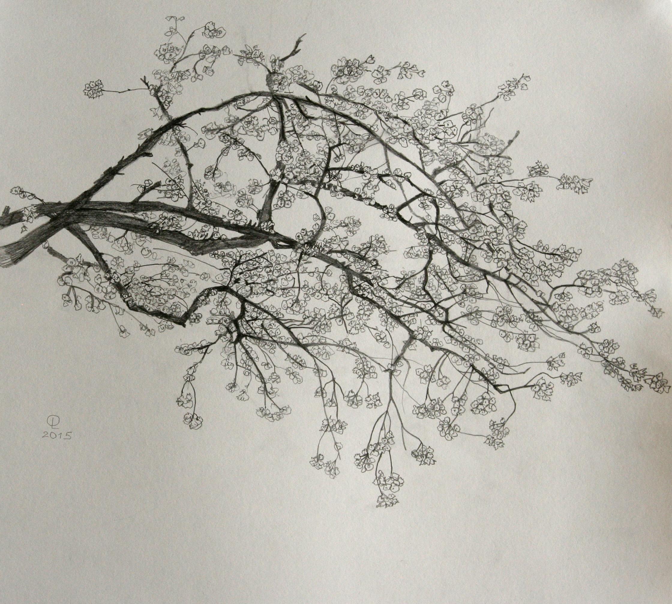 blossom_branch.jpg