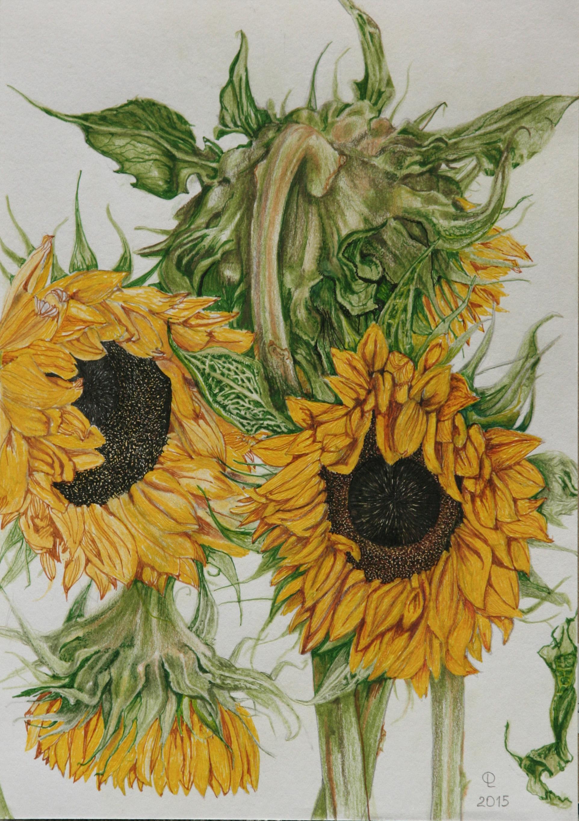 sunflowersA4.jpg