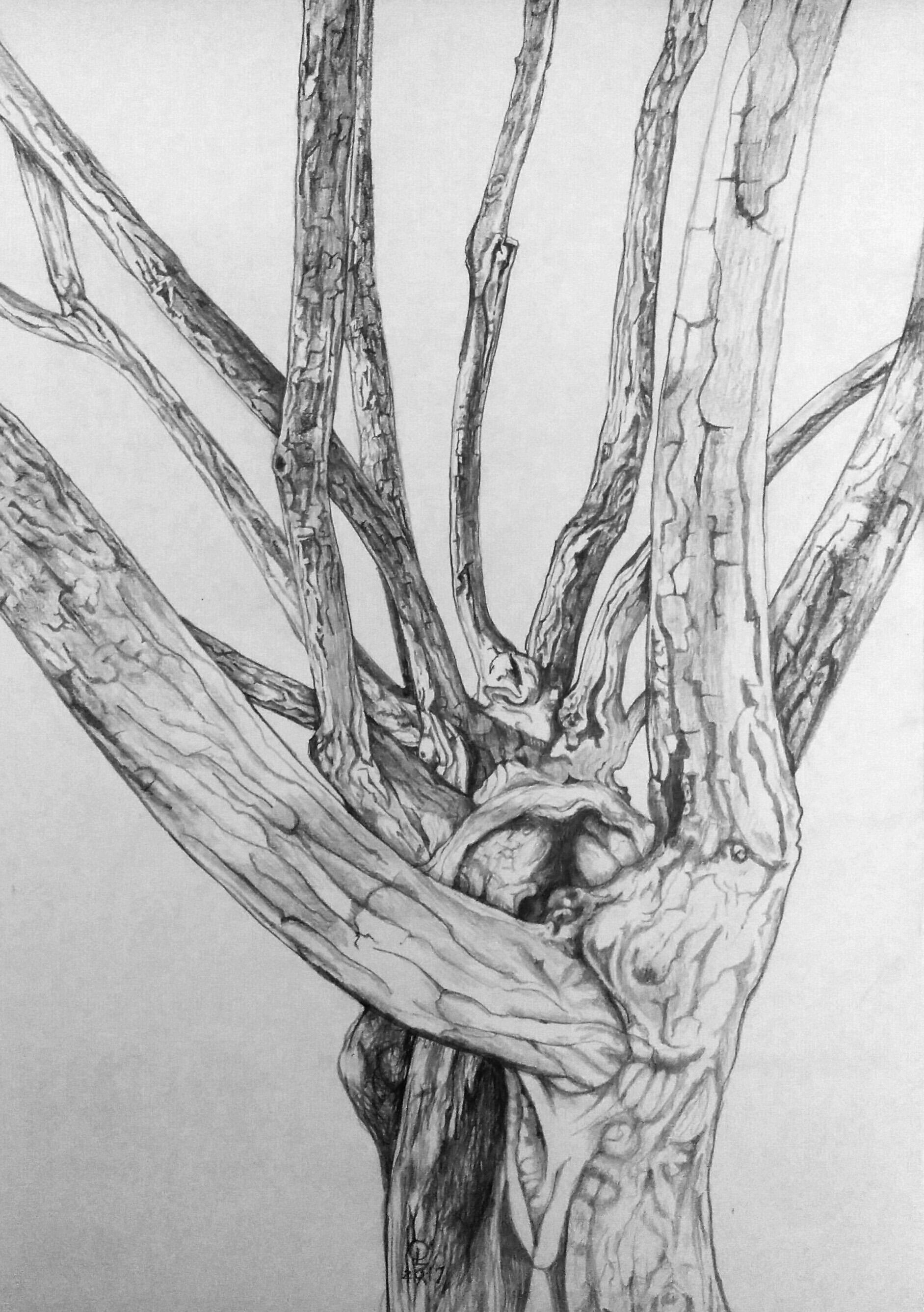 wombtree.jpeg