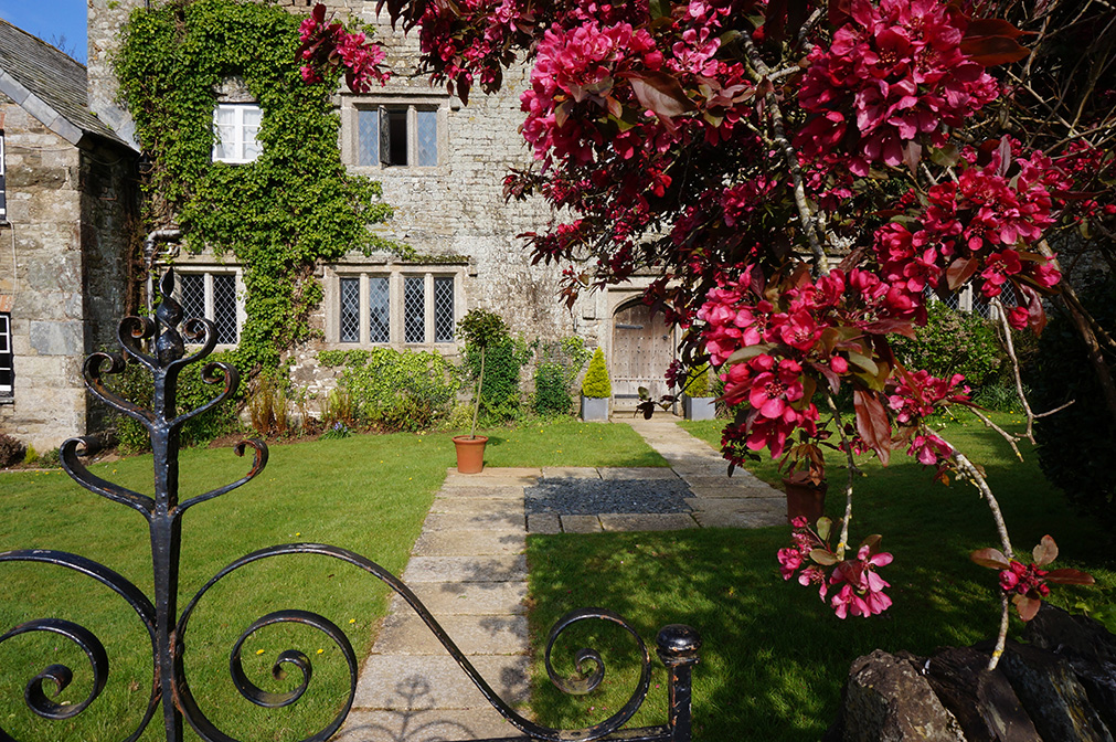 Spring cherry blossom in full bloom at wedding venue Pengenna Manor in Cornwall.jpg