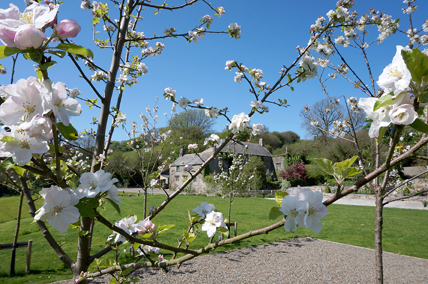 The ceremony garden apple trees in spring blossom at wedding venue Pengenna Manor in Cornwall.jpg