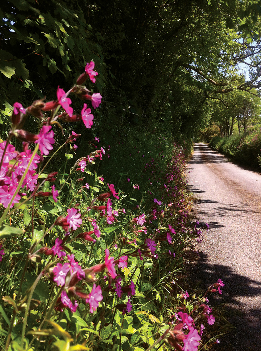 The private drive to wedding venue Pengenna Manor in Cornwall in spring.jpg