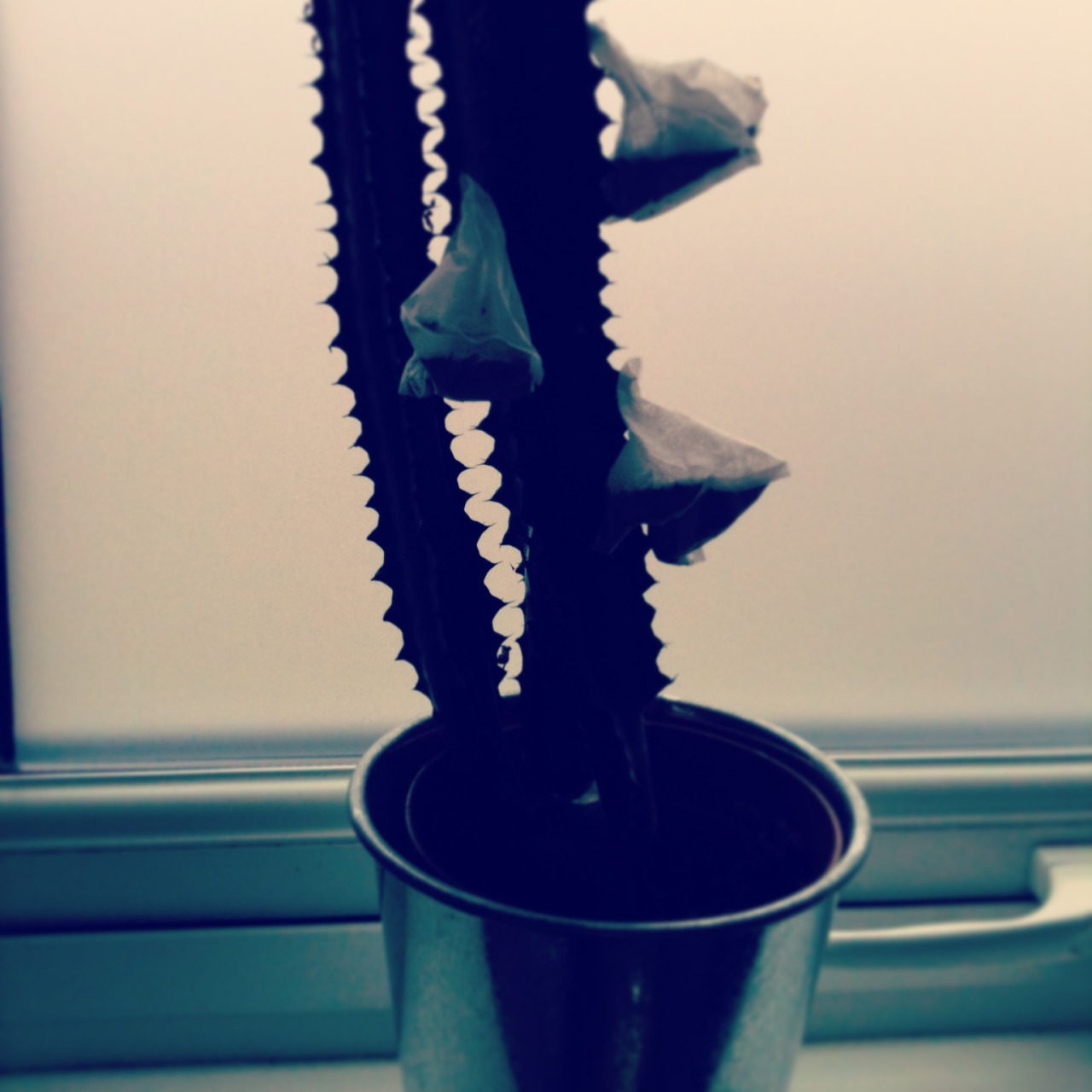 We know all too well that money doesn't grow on trees but in the Folk office you might be surprised to learn that our cactus does grow tea bags…