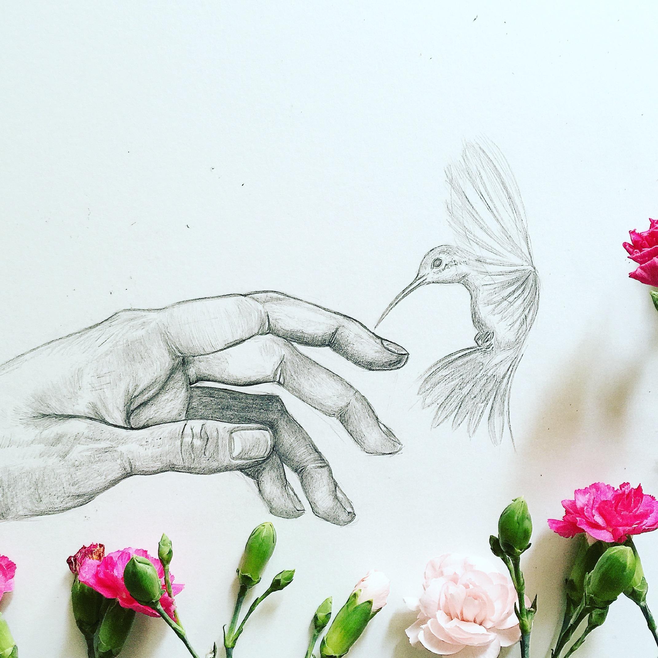Hummingbird Drawing | Pencil Portrait