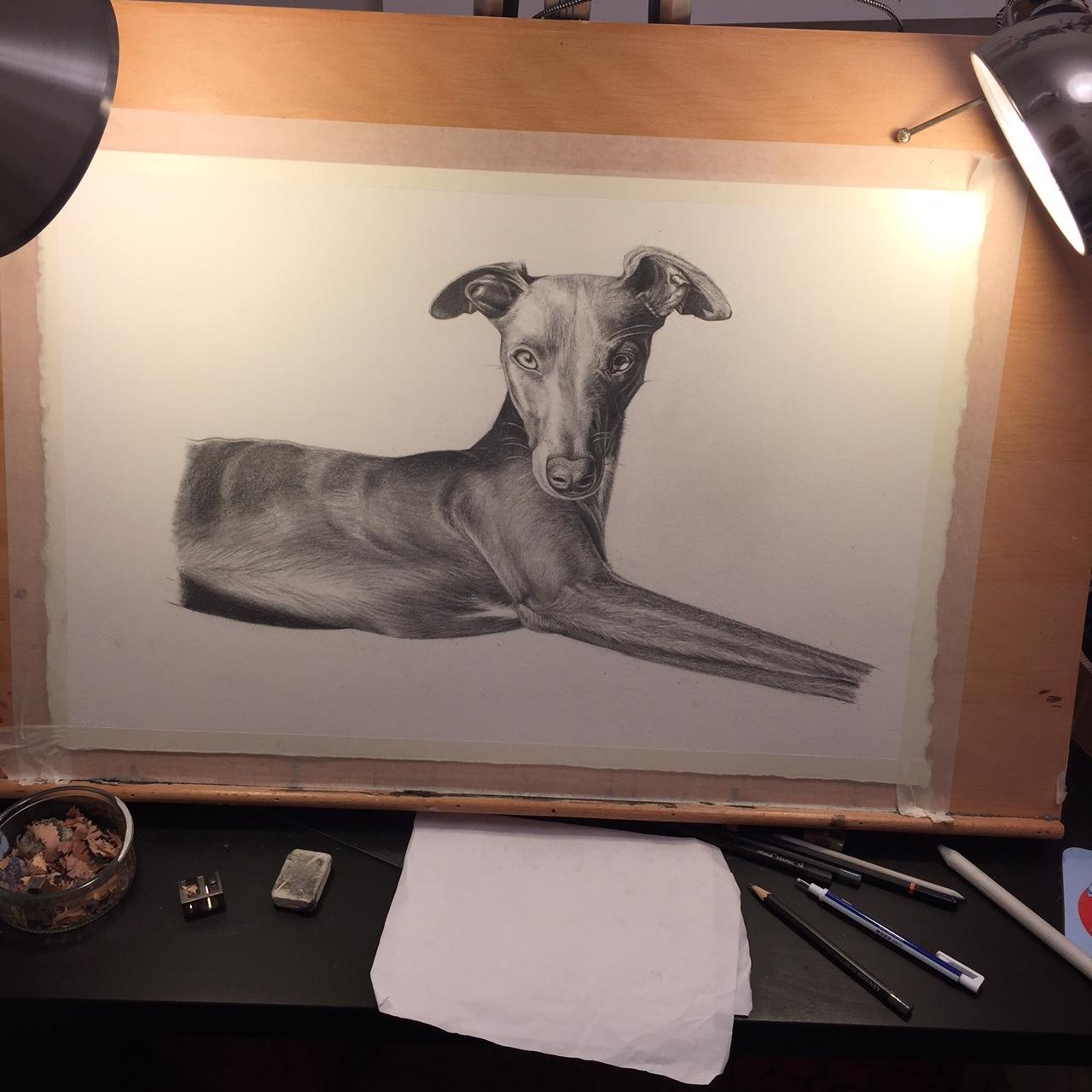 Photorealistic Whippet   Art Commissions   Dog Art