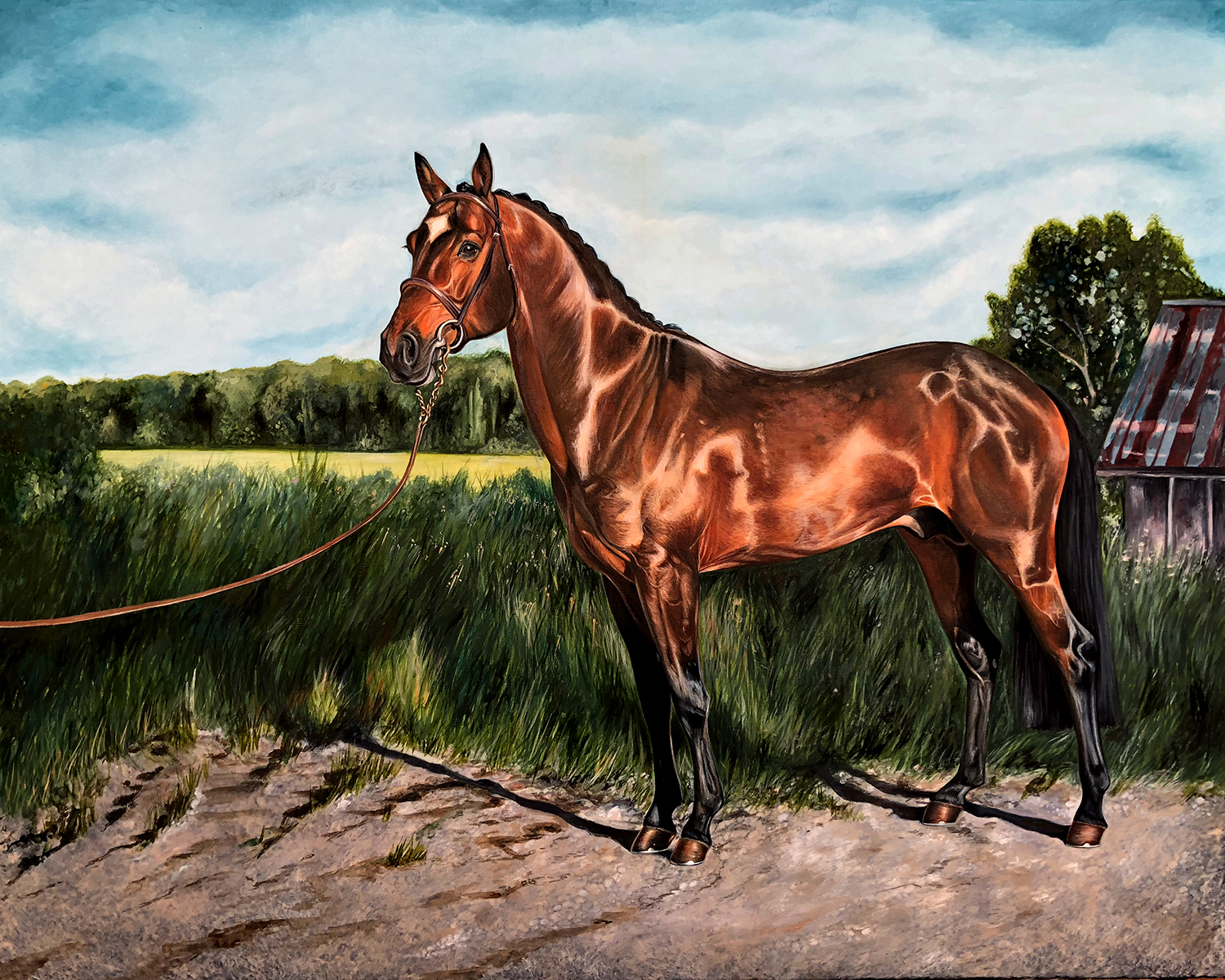 Canadian Stallion | Horse Portrait | Horse Painting