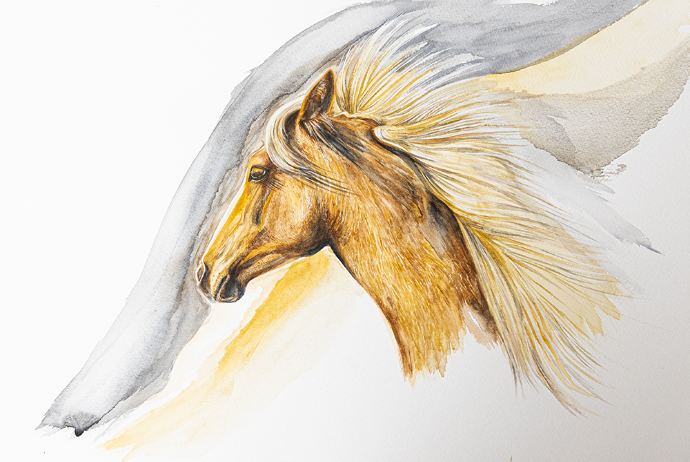 Palomino Head Study | Horse Art | Watercolour