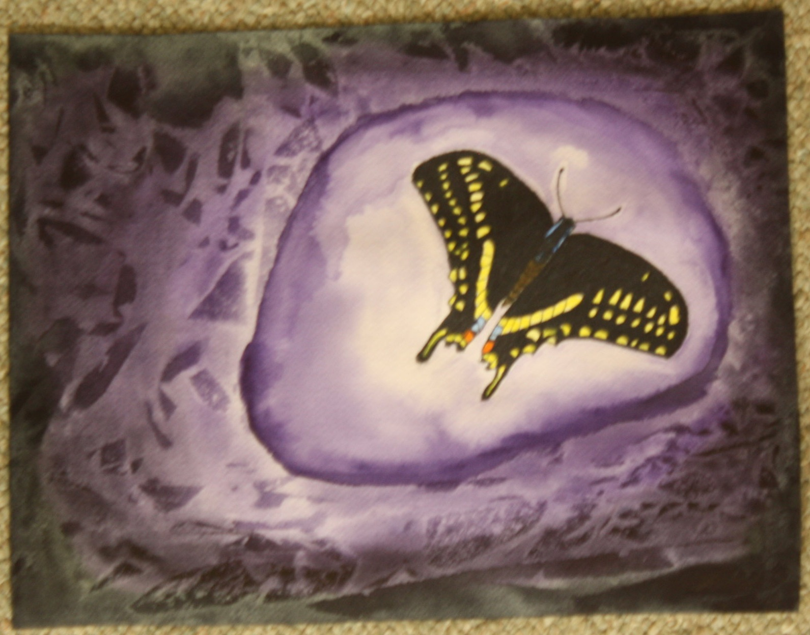 F Arnold, Swallowtail Butterfly
