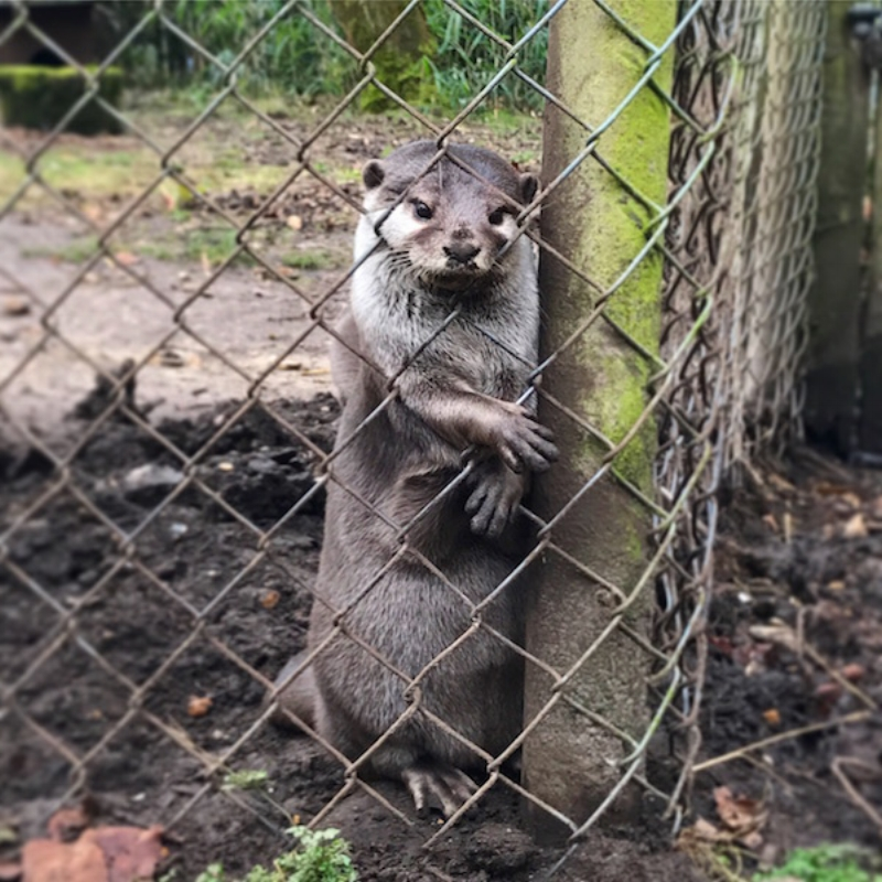 The Asian small-clawed Otters stole my heart completely!