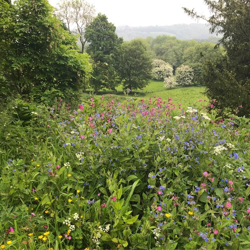 Beautiful gardens at Newton Park.