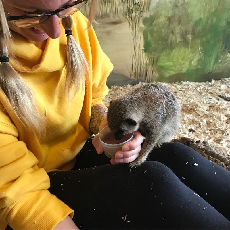 animal-experience-meerkats.JPG