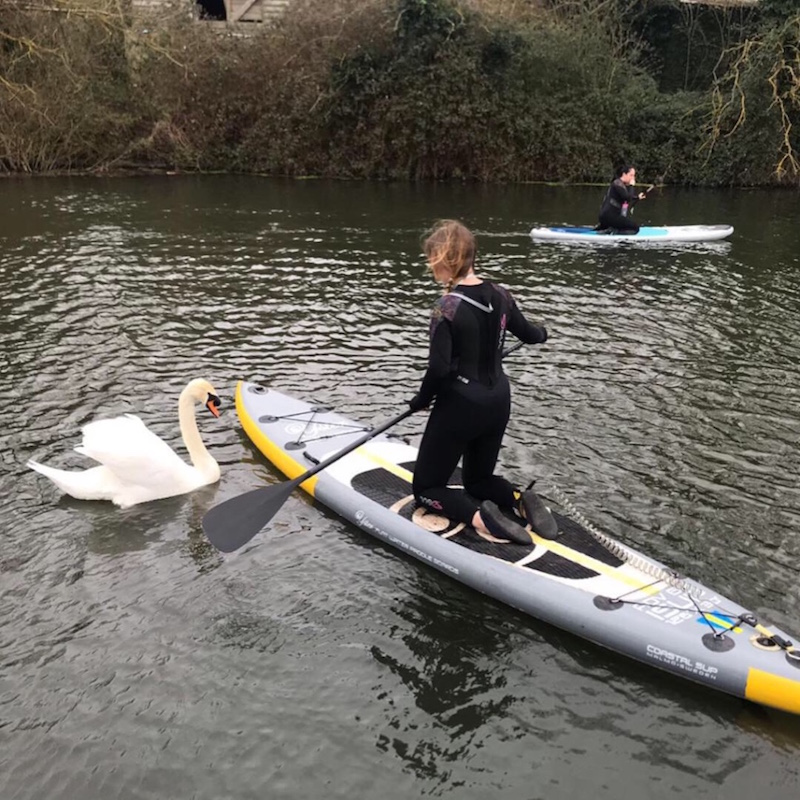 No swans were harmed in the making of this…