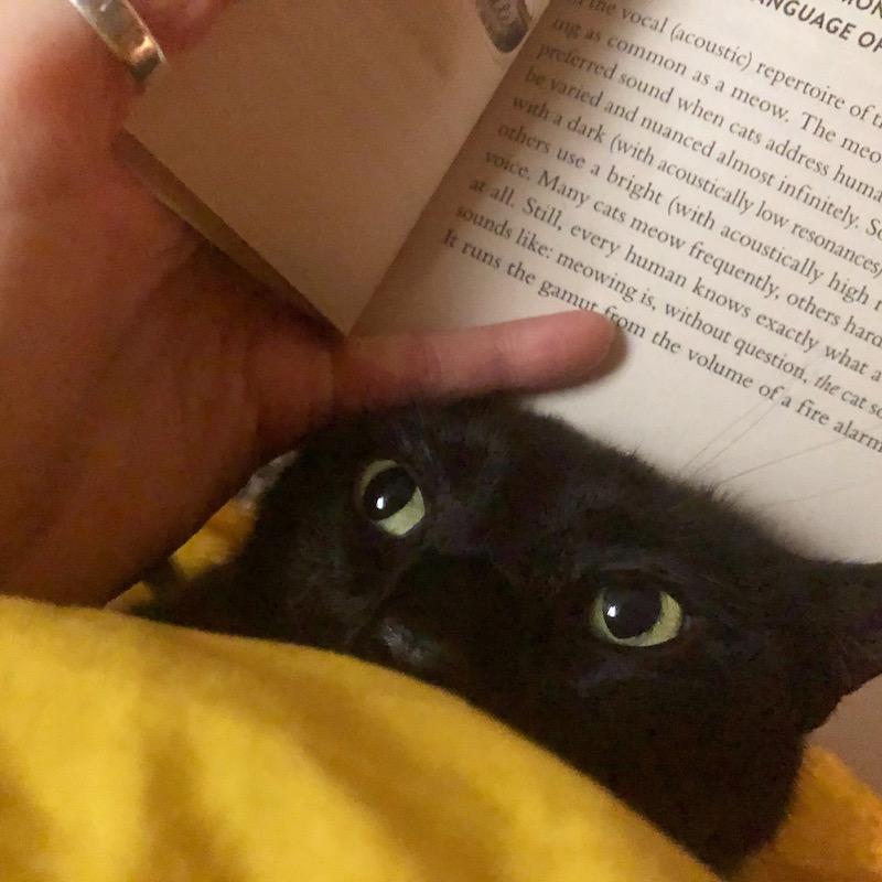 """Whatcha reading?"" 👀"