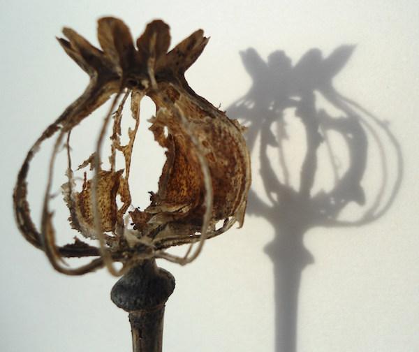 Helen Poremba Textile Artist - Dried Poppy Heads