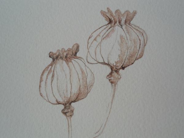 Helen Poremba Textile Artist - poppy-head-coloured-pencil