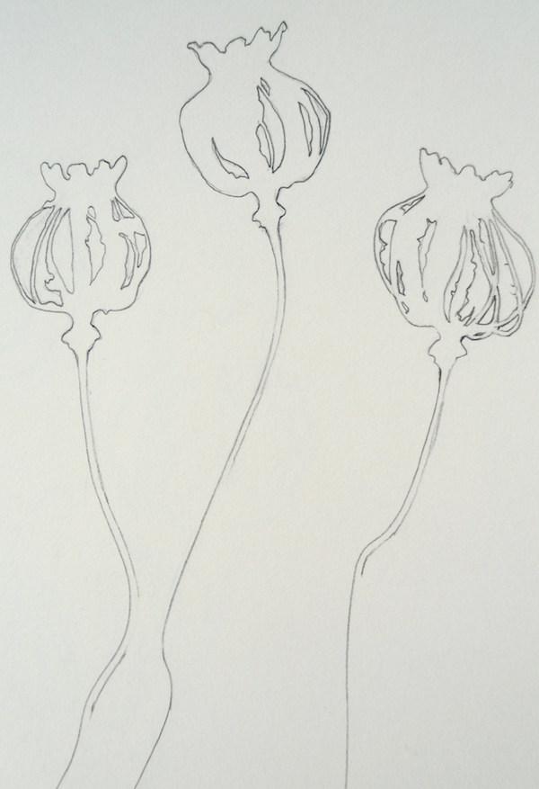 Helen Poremba Textile Artist - poppy head sketch