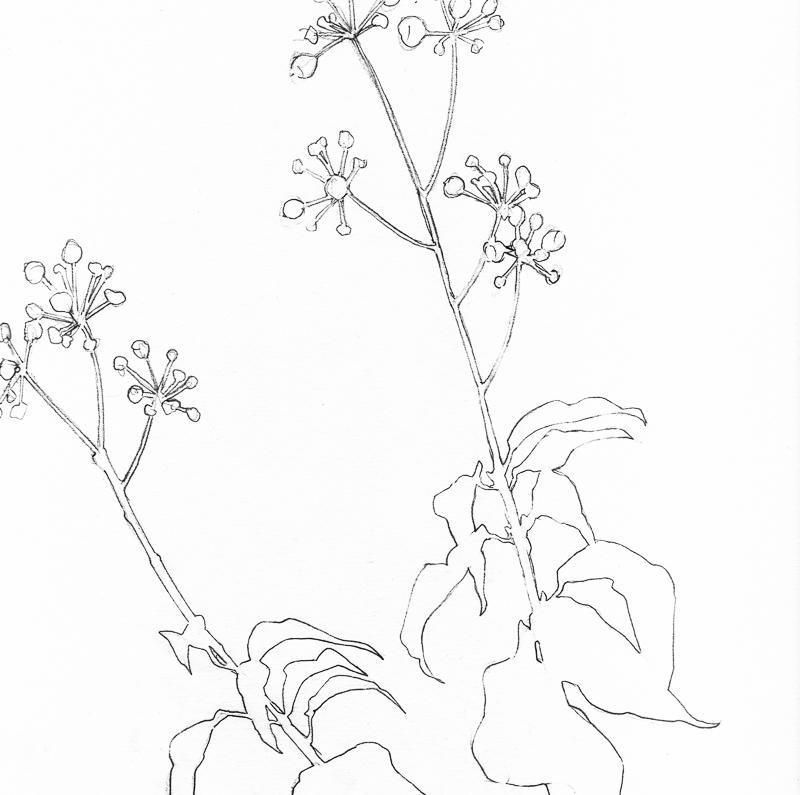 Plant Sketches | Helen Poremba Textile Art & Sewing Classes
