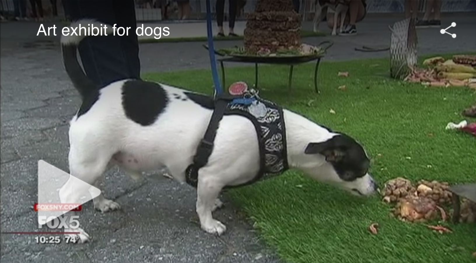 NEW YORK (FOX 5 NEWS) - Interactive art installation for dogs