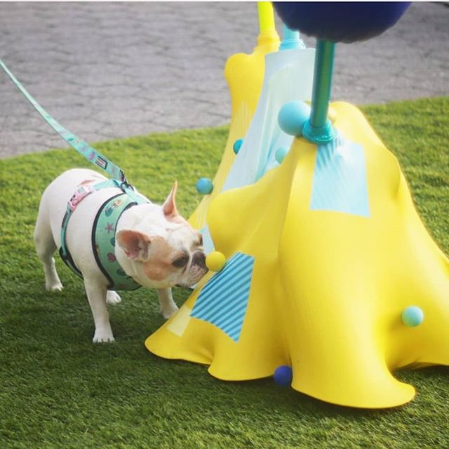 #tbt our first exhibition where Culture Hounds like Beignet got to explore art made just for them by contemporary artists such as  @erichibit whose colorful sculpture attracted pups with a canine friendly color palette and dynamic shapes! 📸 🙏 @a_frenchie_tail @artsbrookfield #dogumenta #culturehound #artdog #publicart #artforevertone #frenchiesofinstagram #dogstagram