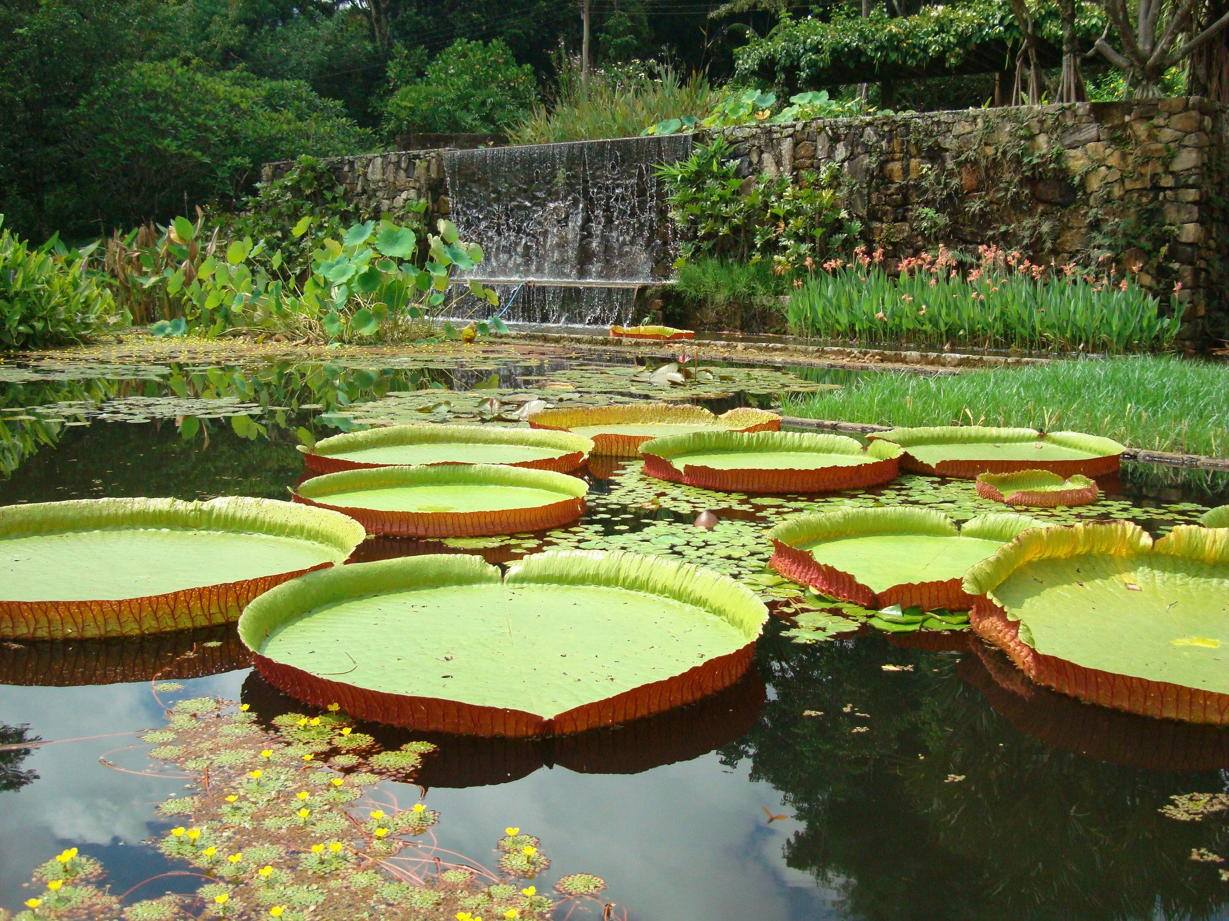 Jardín de la Fazenda Vargem Grande, residencia Clemente Gomes en Areias, diseñado por Roberto Burle Marx, 1979. Cortesía de Burle Marx Landscape Design Studio, Rio de Janeiro.