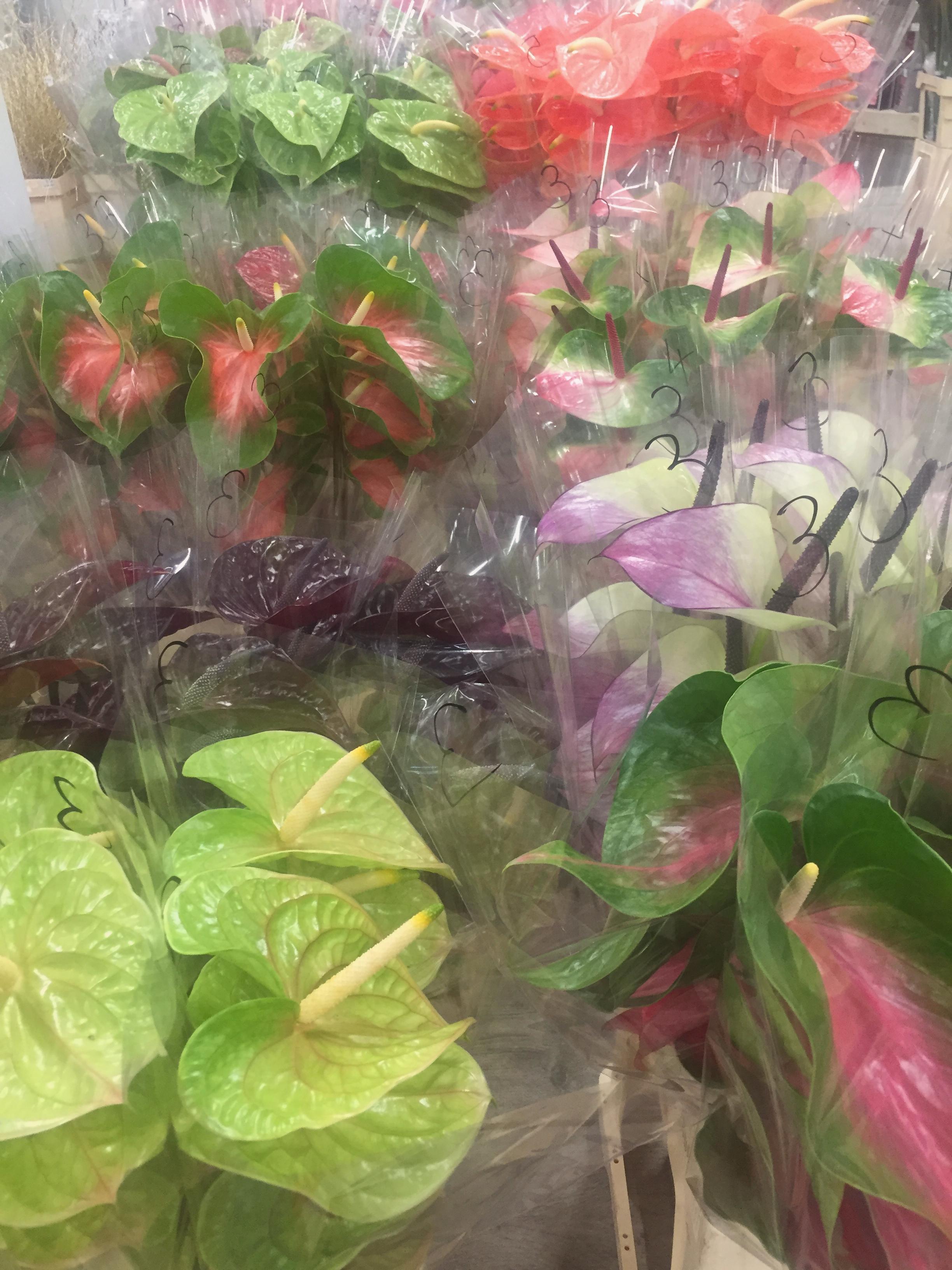 Blumenmarkt2.jpg