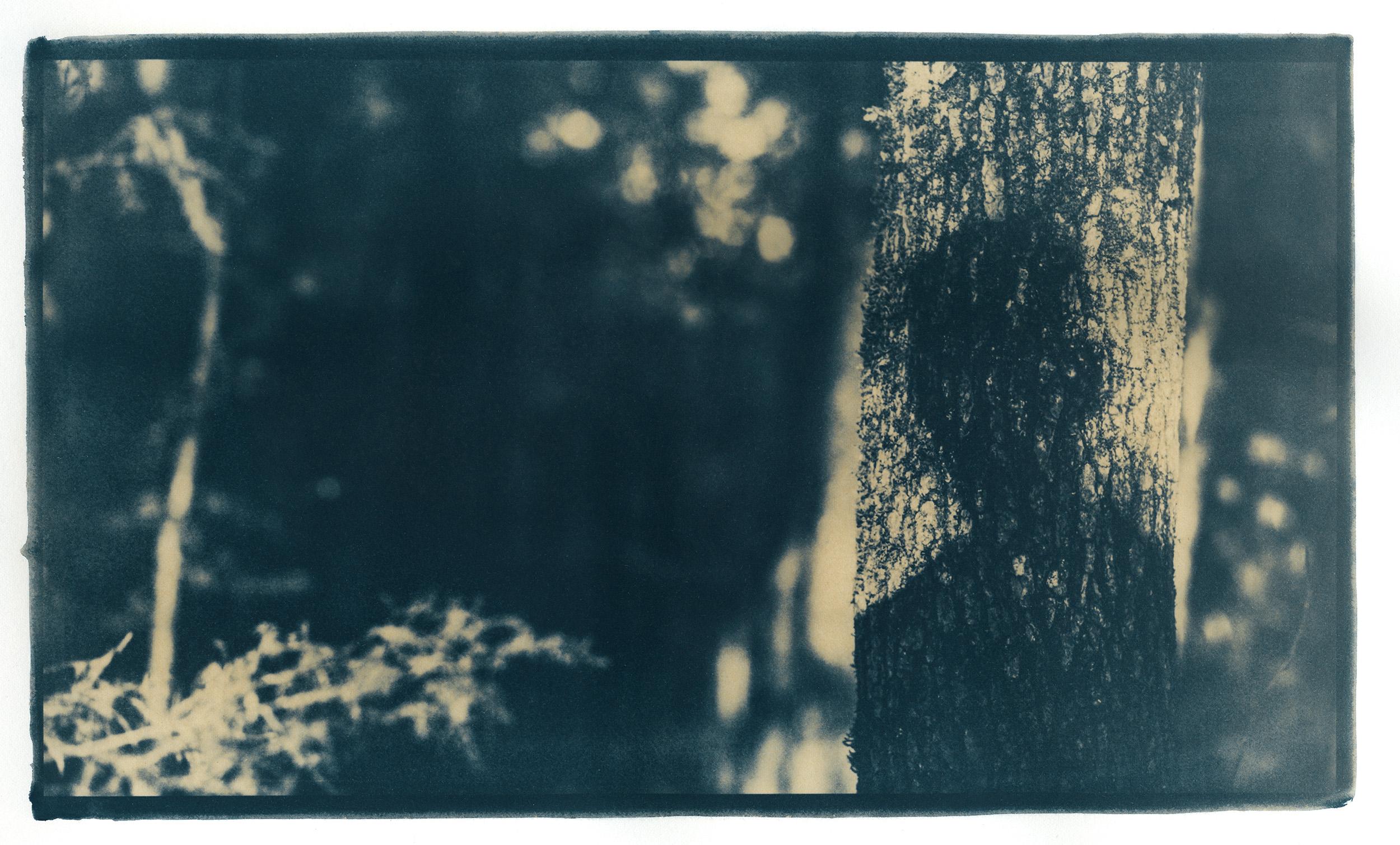 Shadow B003-Edit.jpg