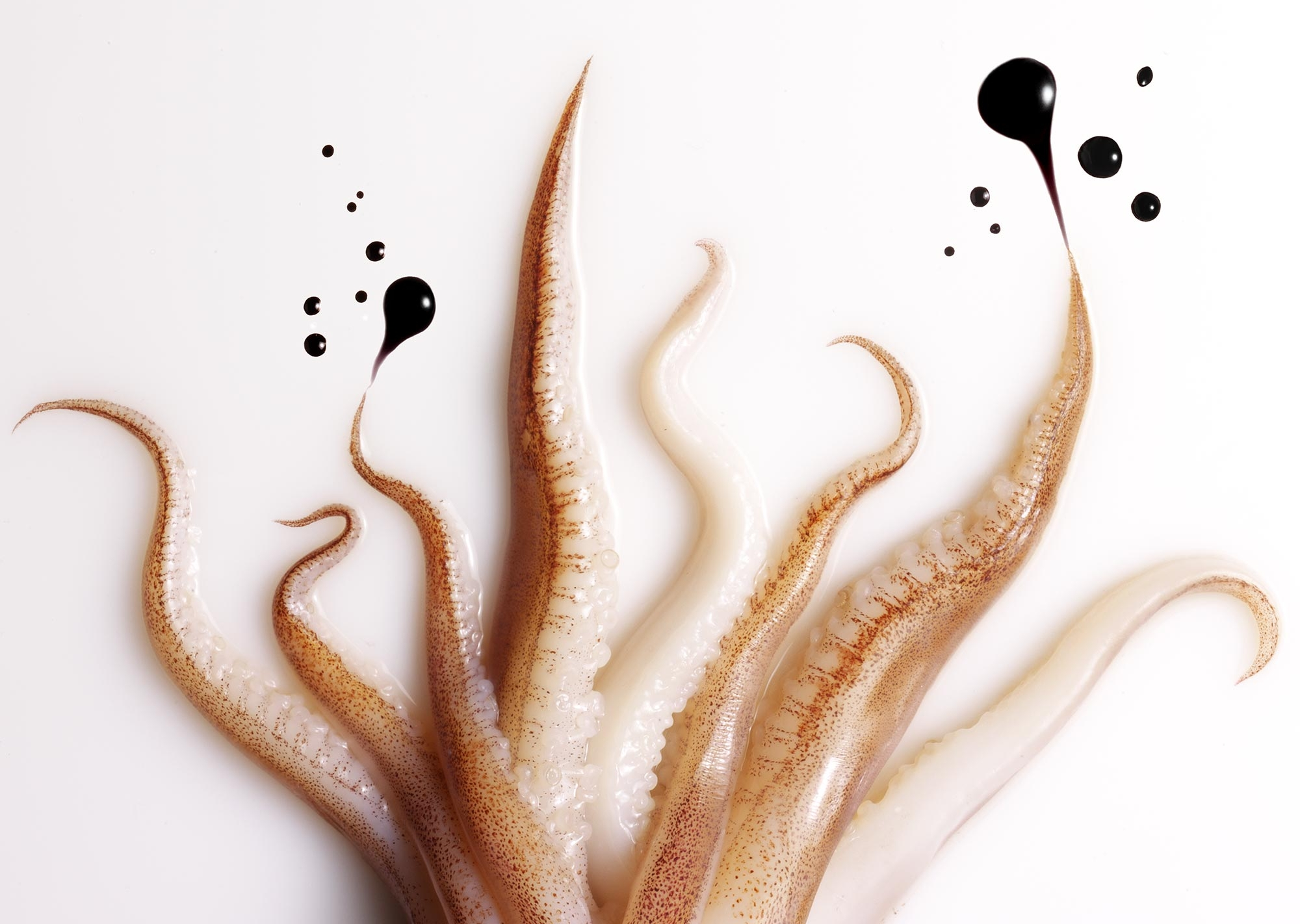 Hilary Moore Food Photography Squid