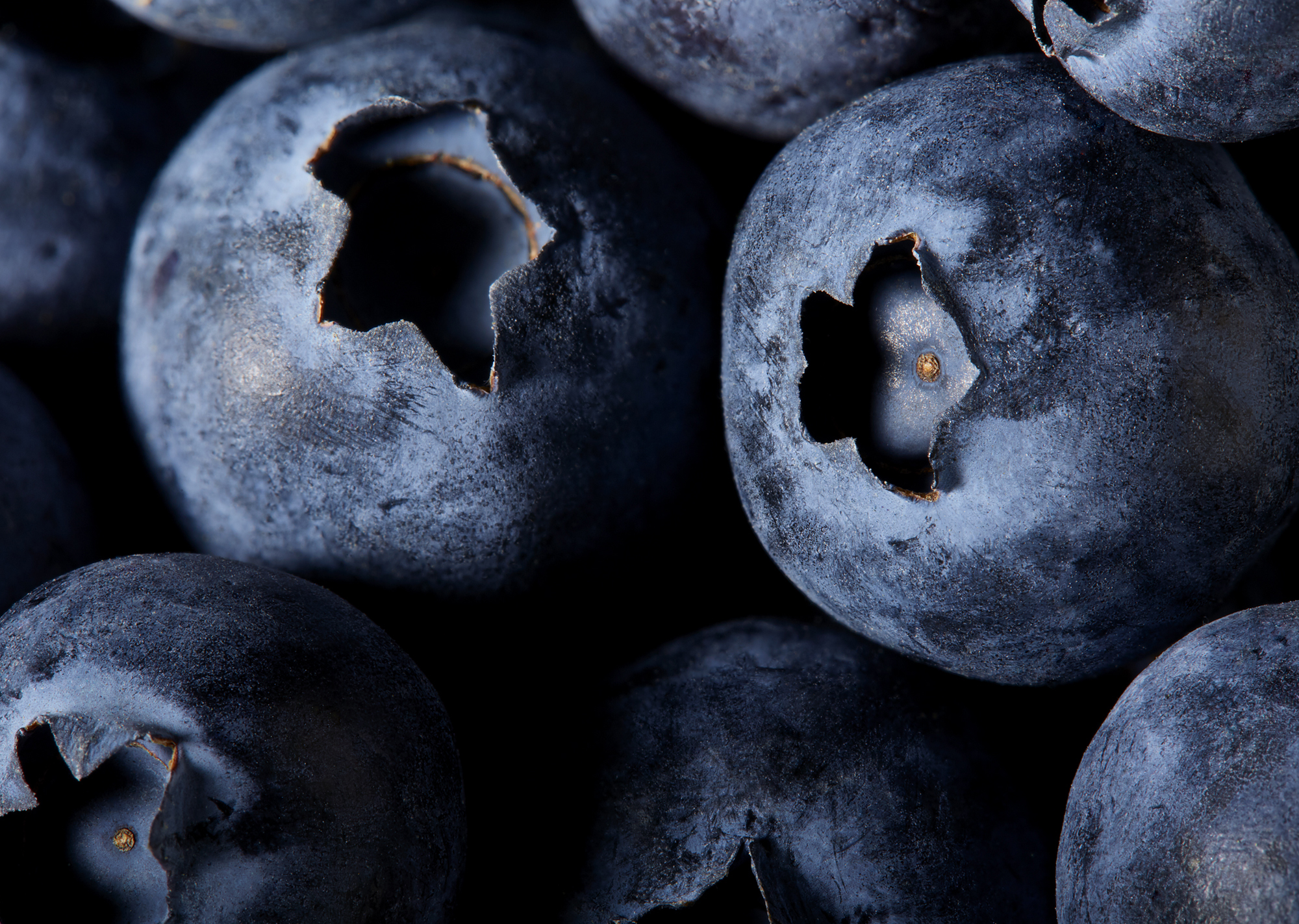 Hilary-Moore-Food-Photography-blueberries-slideshow.jpg