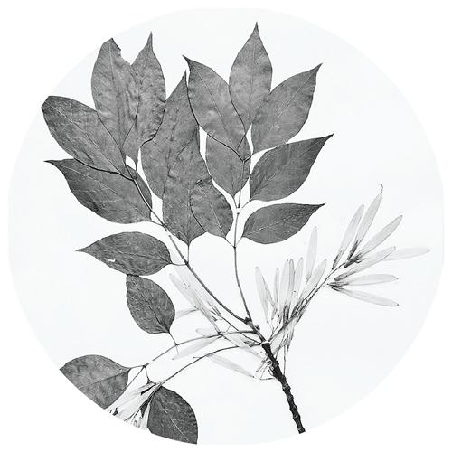 herb_circle-2_500x500.png