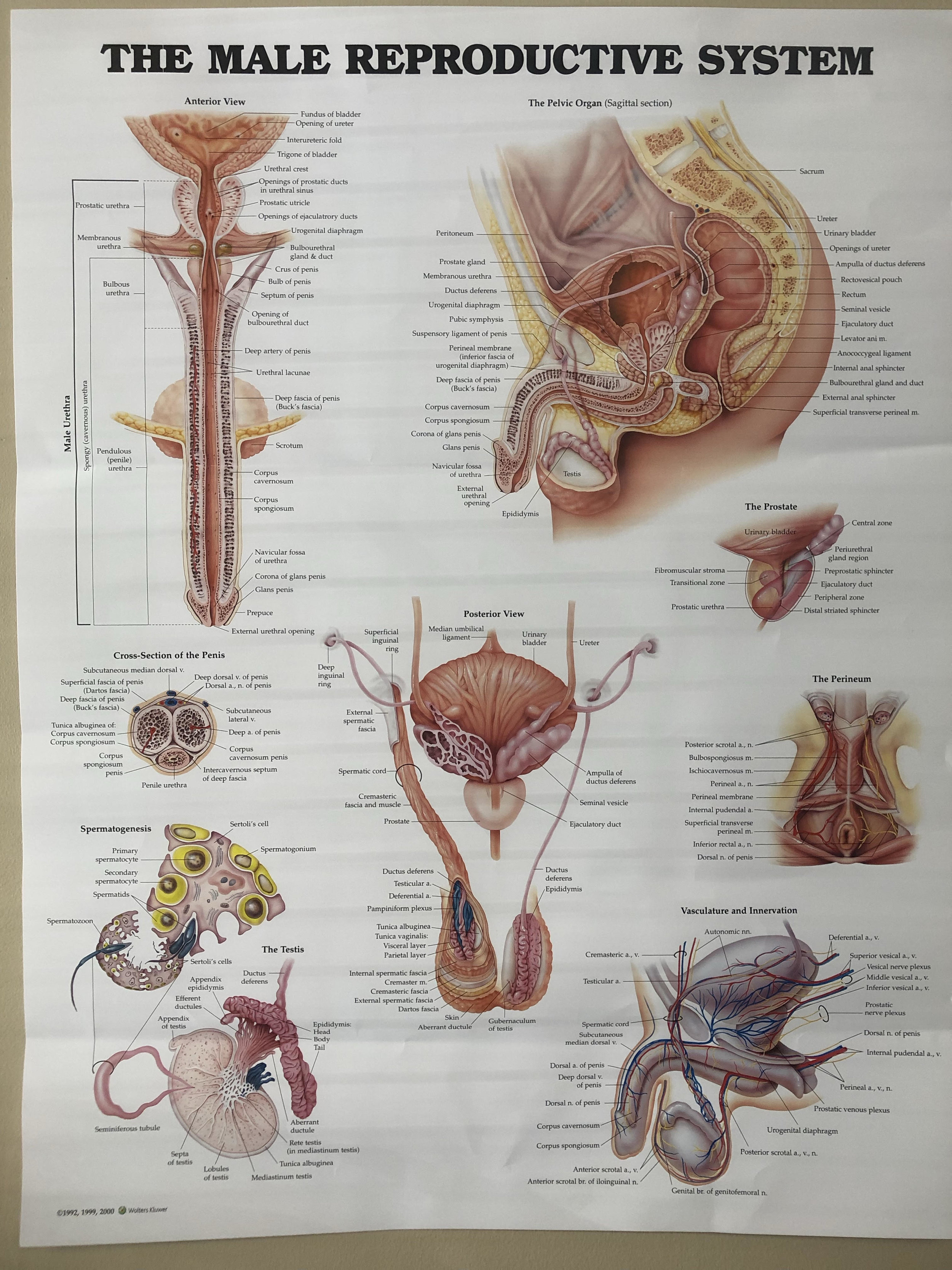 Best Pelvic Floor Pelvic Health PT Erectile Dysfunction Columbia Howard County MD AAA Physical Therapy.jpg