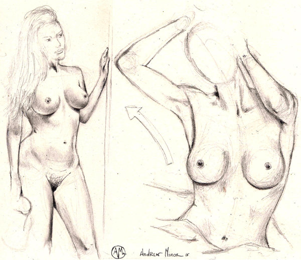 female_anatomy_studies_by_andrewminor-d8sby0t.jpg