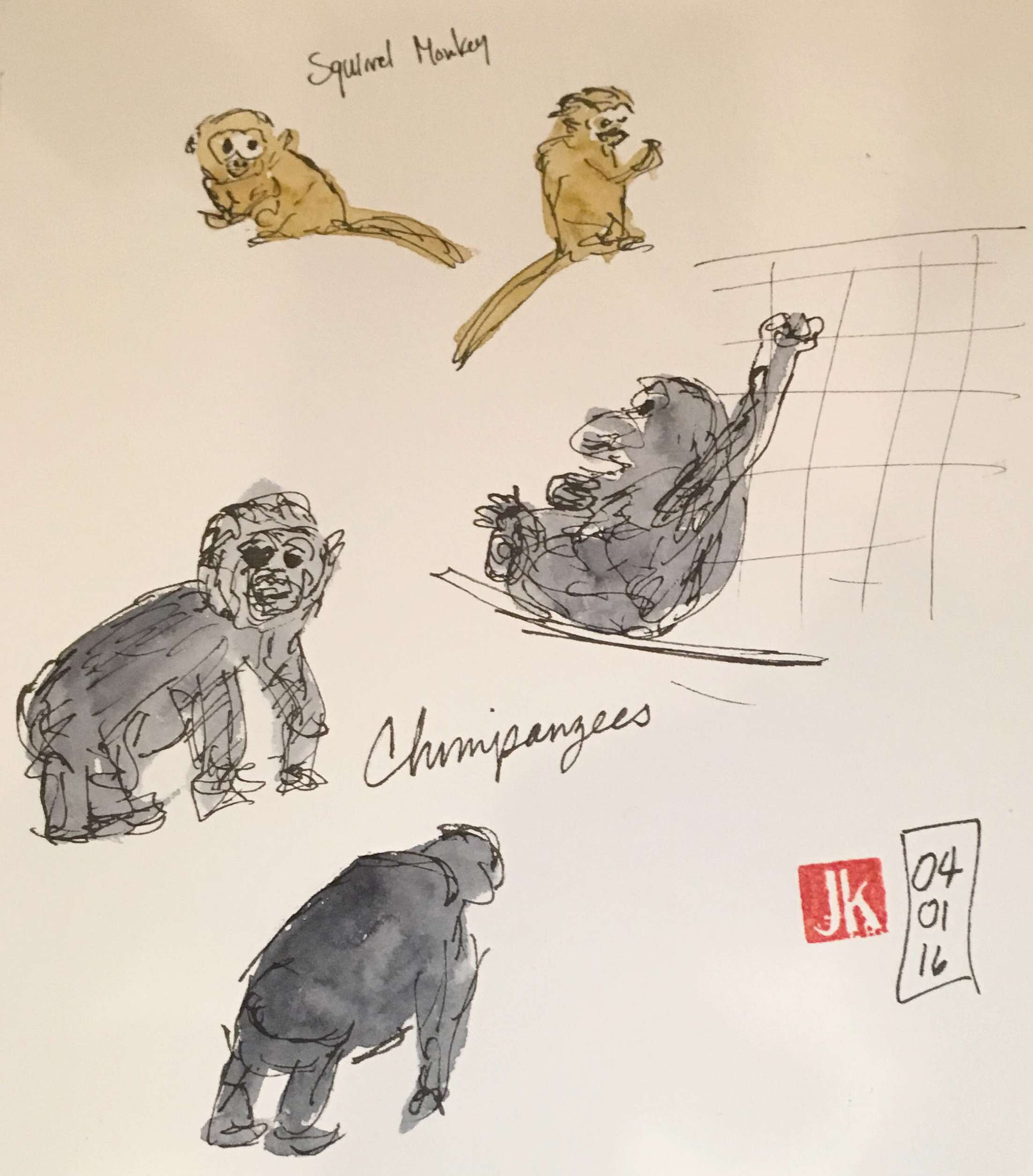 Squirrel monkeys & chimpanzees