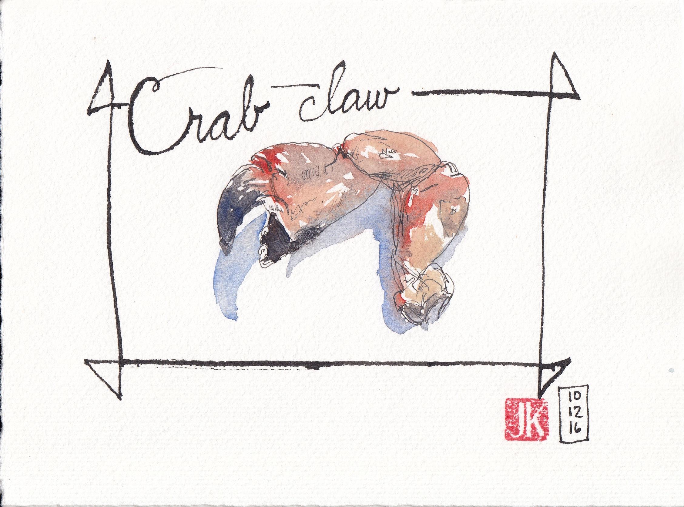 A crab claw found near the beach