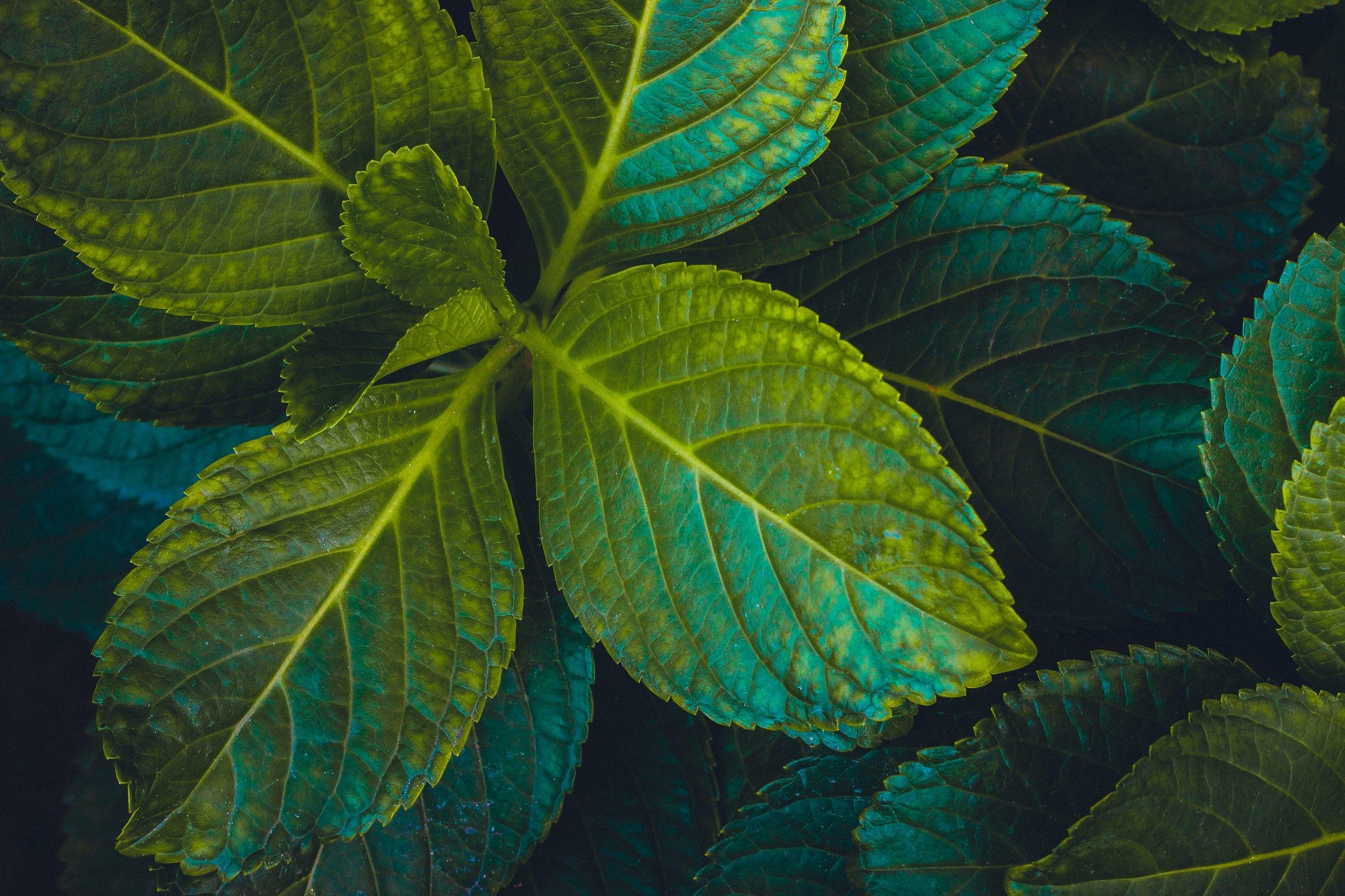 Miltant Hope For Restoring Our Ecological Community - Robert Mason jpeg.jpg