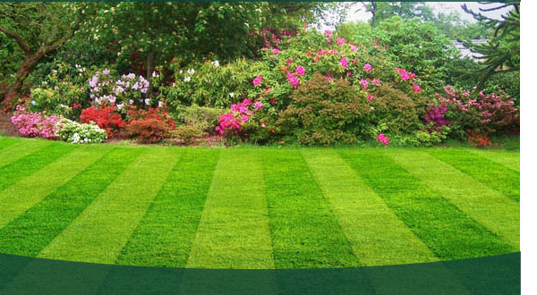 Lawn-Care-Main.jpg