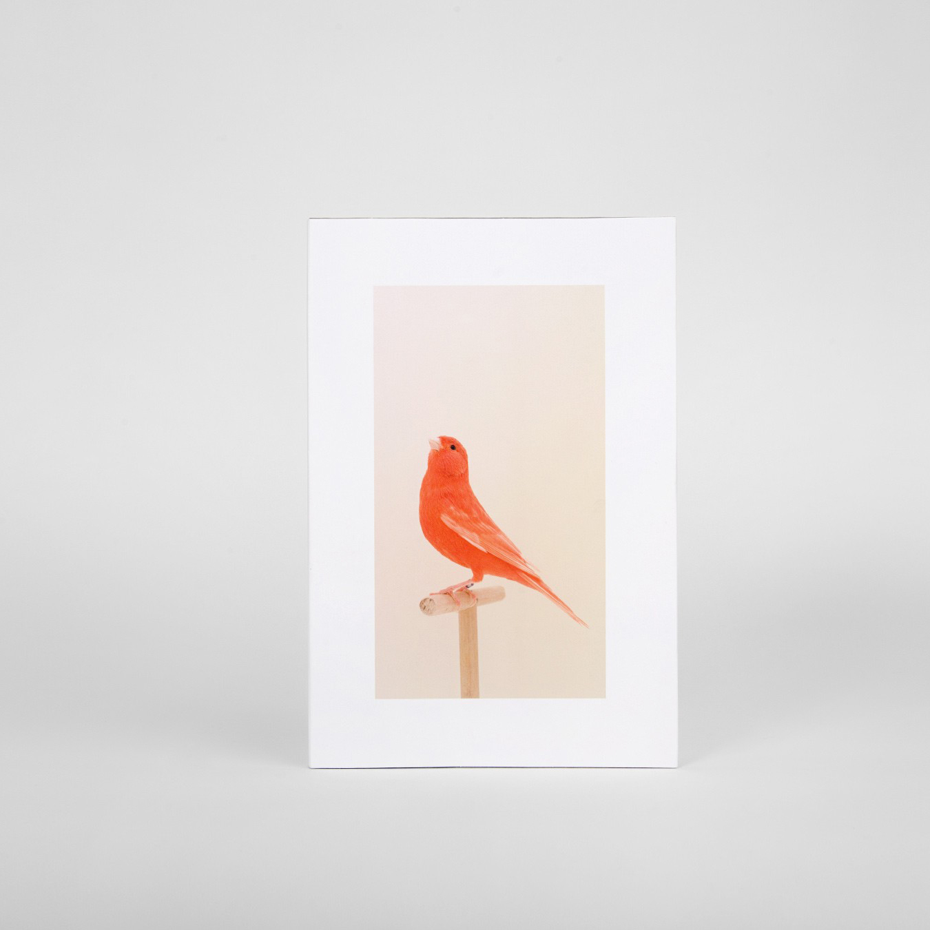 An Incomplete Dictionary of Show Birds  by Luke Stephenson