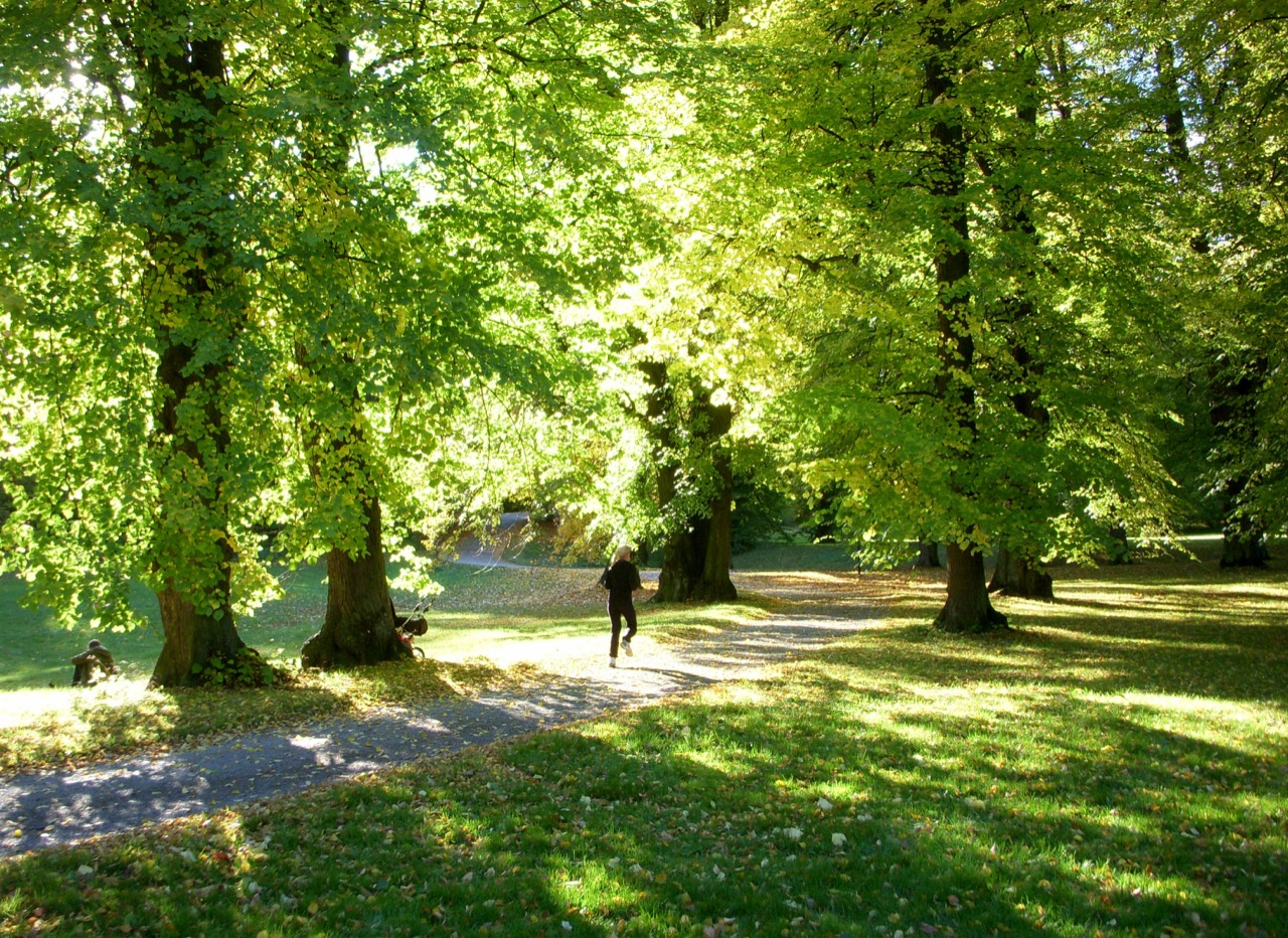 Hagaparken_höst_2010c (kopia)-resize-jpg-1280px.jpg