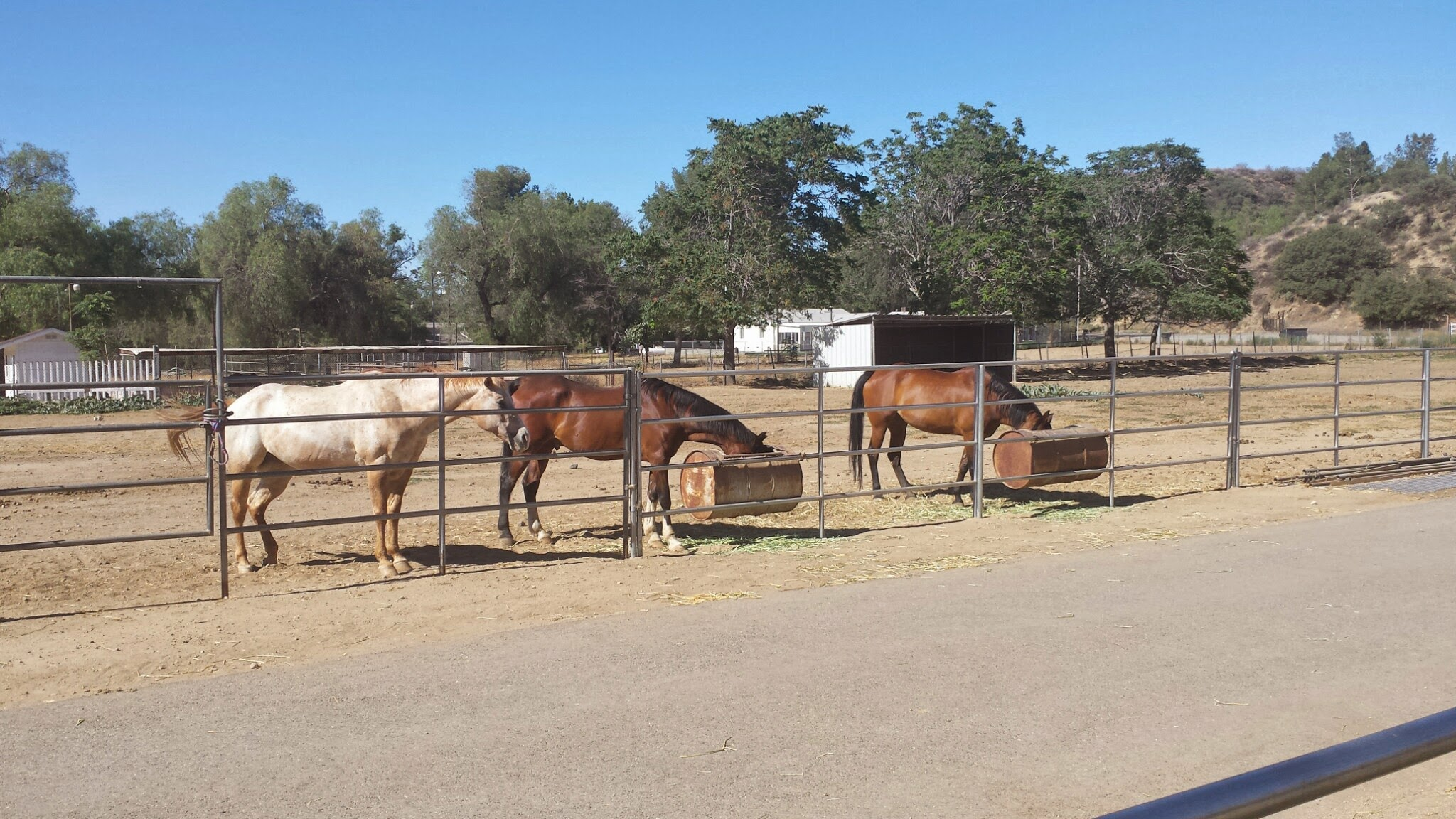 Horse Boarding And Leasing Gilchrist Farm