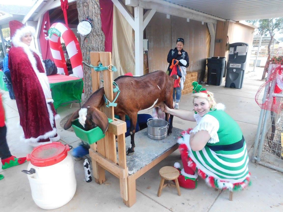 elves milking.jpg