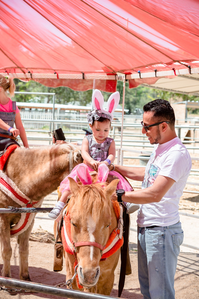 Learn more about our Pony Rides by clicking here - Every Saturday from 9AM - 2PM enjoy pony rides for just $5! Suitable for children that are over One year old (and able to sit up by themselves) through to children that are 80 pounds. Our sweet ponies are calm, gentle, loving and a great introduction for your little ones! Also available during specials events (additional hours during the Harvest Festival, Holiday Hoedown and Spring Fling) and available for your own private party or event at Gilchrist Farm!