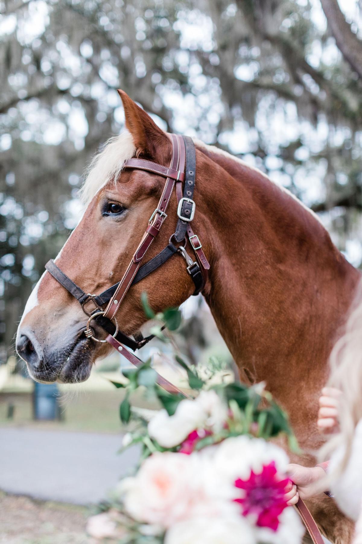 Horse wedding at Whitefield Chapel in Savannah, Georgia
