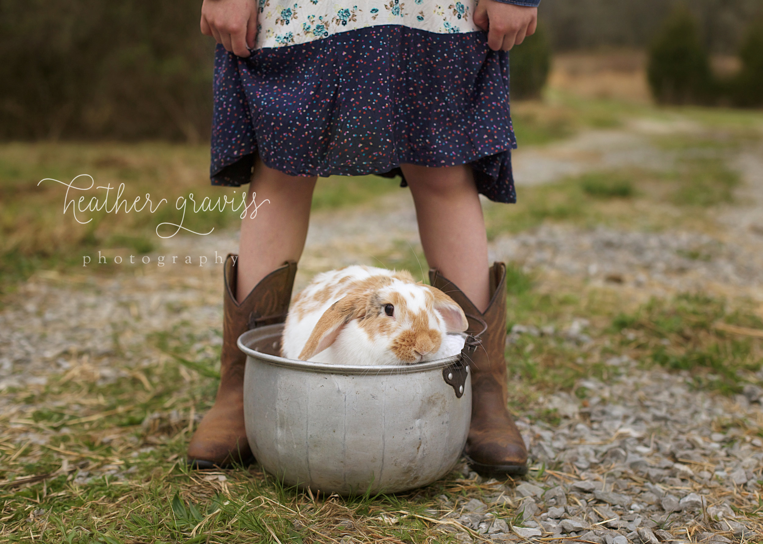 bunny-in-a-bucket.jpg