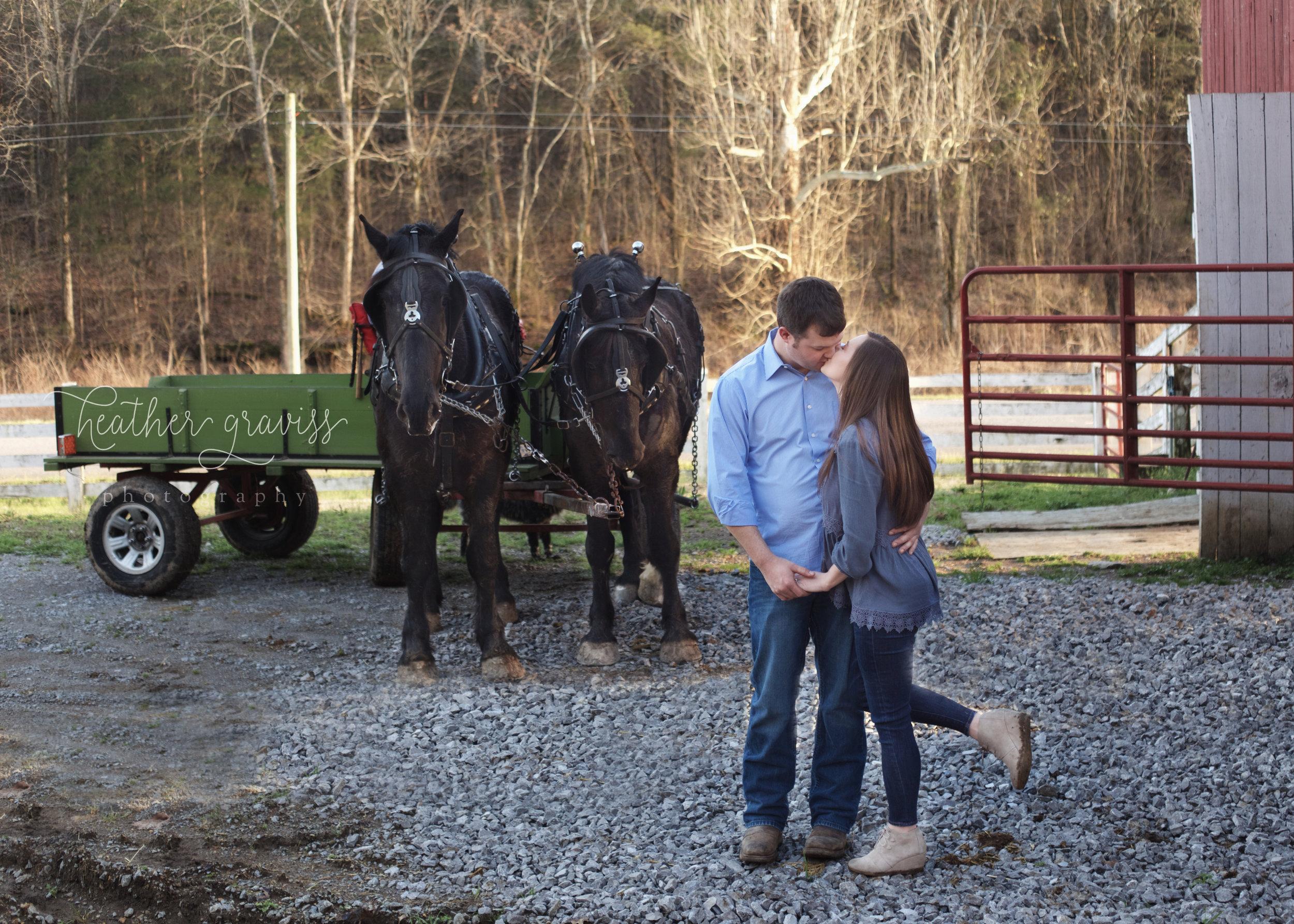 wagon-horses-kiss.jpg