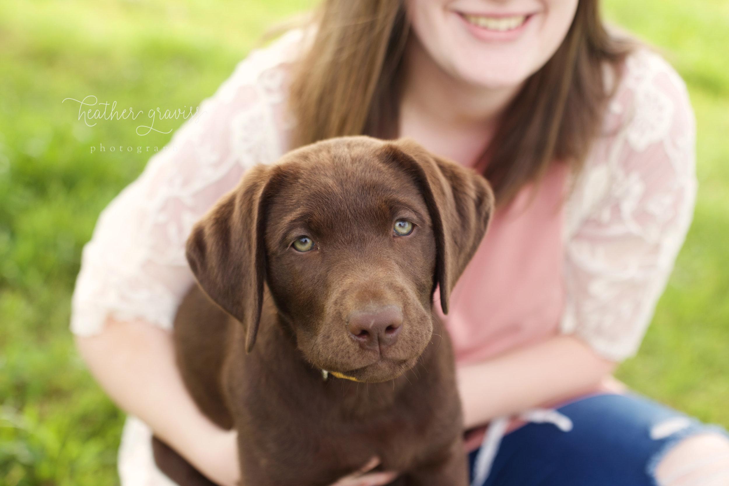 little-brown-dog.jpg