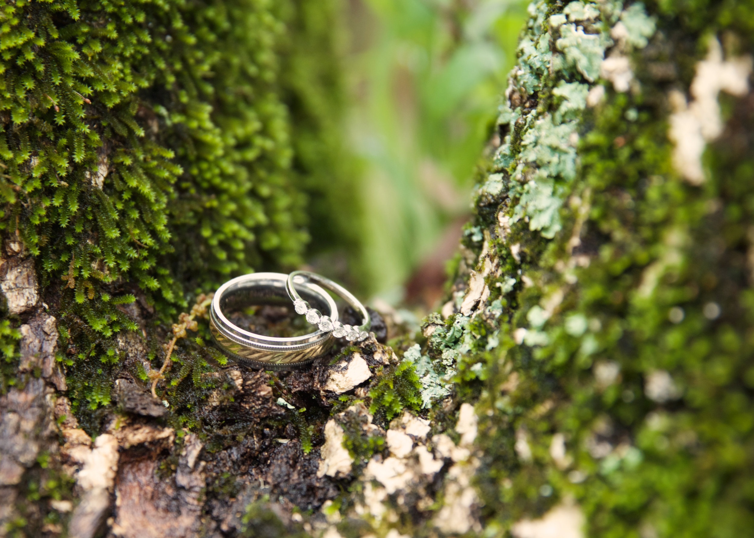38rings-in-a-tree.jpg