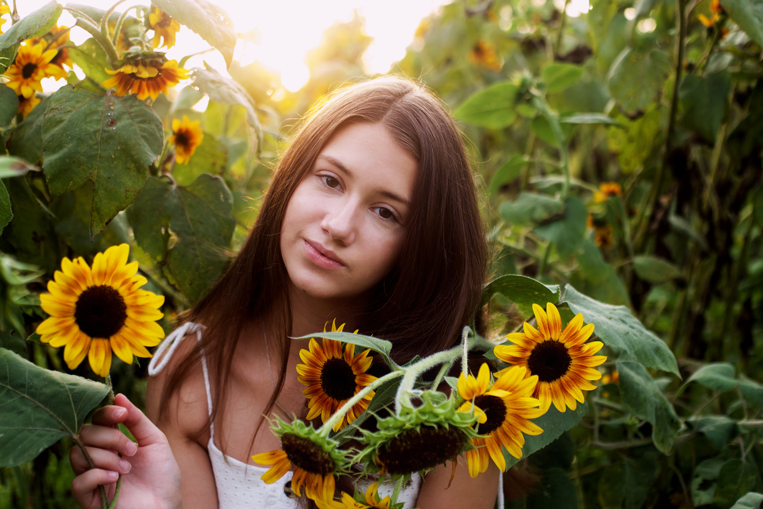 beautiful-sunflowers.jpg